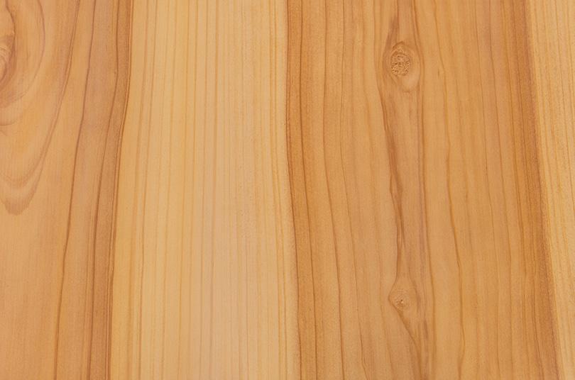 Pinus 3